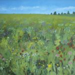 wild flower meadowa